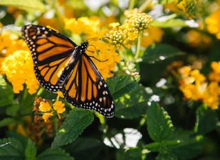 Create Your Own Pollinator-Friendly Garden