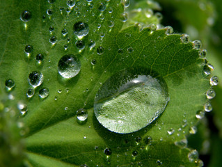 Why You Need to Water Your Plants this Winter