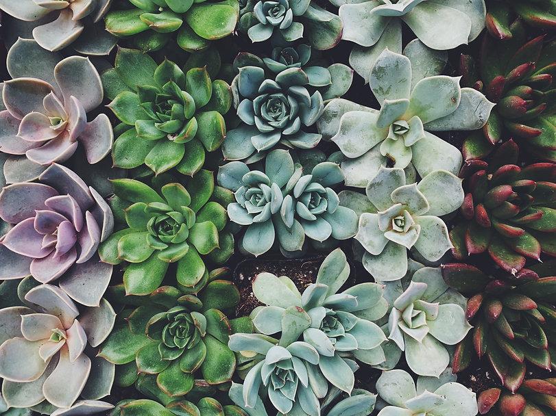 Succulents 4.JPG