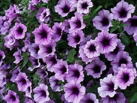 Introducing the 2018 Plants of the Year!