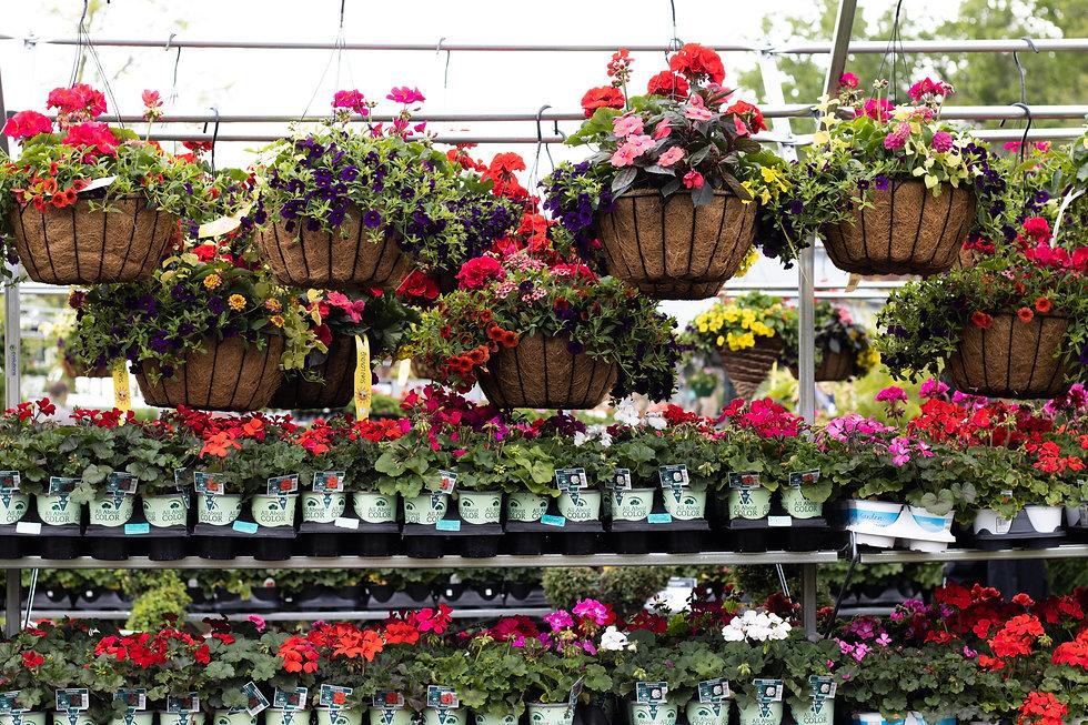 Hanging Baskets 4.jpg