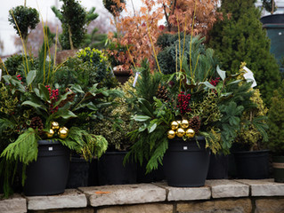 Holiday Decorating with Winter Containers and Greens