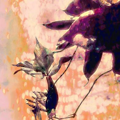 Vine Leaves Literary Journal