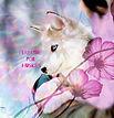 I Breathe for Huskies