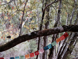 The Traveling Native // Notes for Attending a Silent Retreat