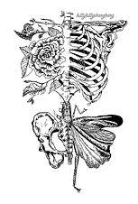 drawing pelvis.jpg