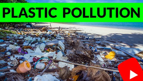 Fighting Plastic Pollution on the Border