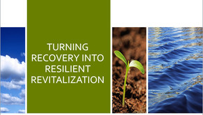 Turning recovery into resilient revitalization