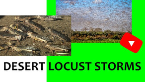 Desert Locusts and Disasters
