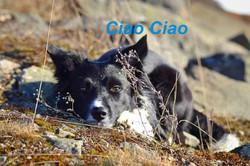 Ciao Ciao 1.jpg