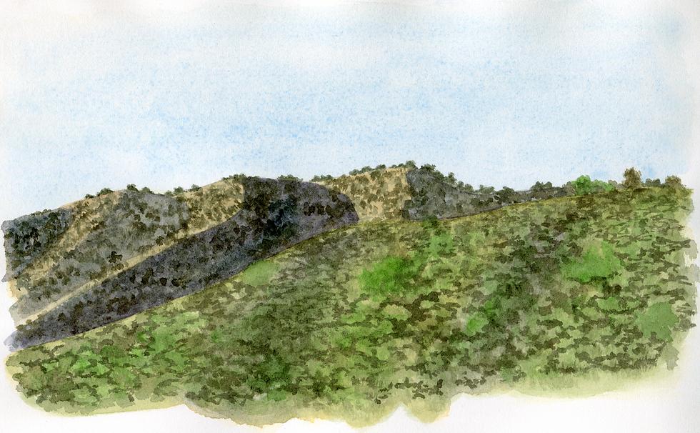 mcfam tea landscape001 (1).tif