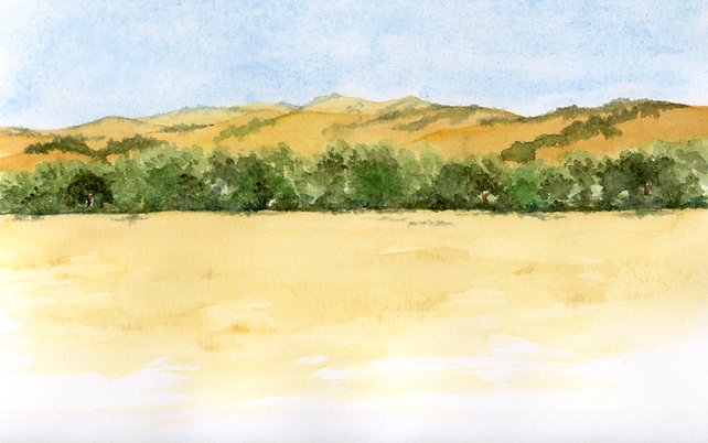 lemon rub landscape001.tif