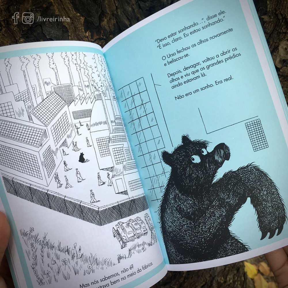 O urso que não era