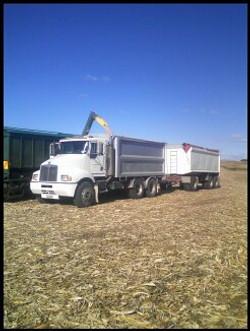 Transport of grain