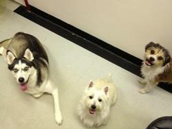 Bella, Fyn and Oscar