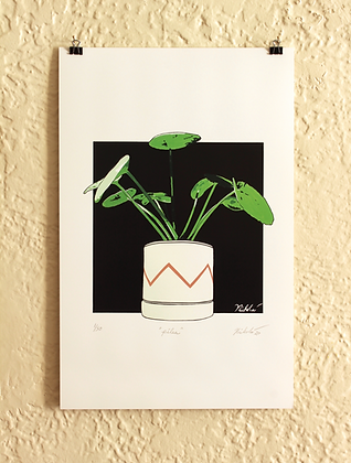 Pilea (Limited Edition)