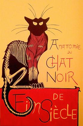 Anatomie Du Chat Noir