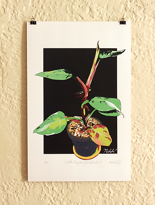 White Knight Philodendron (Limited Edition)