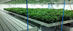 marijuana-warehouse-slide-1021x435.jpg