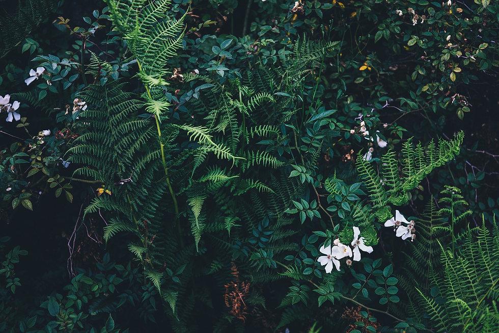 nature-821579_1920.jpg