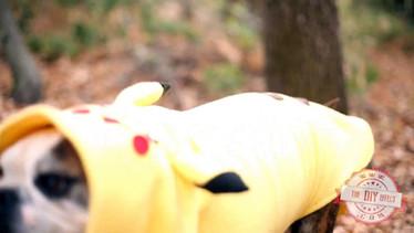 Pokemon Dog Skit