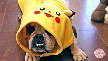 How To Make a Dog Pikachu Costume