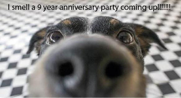 Dog_Nose_9_years.jpg