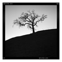 LAX Tree