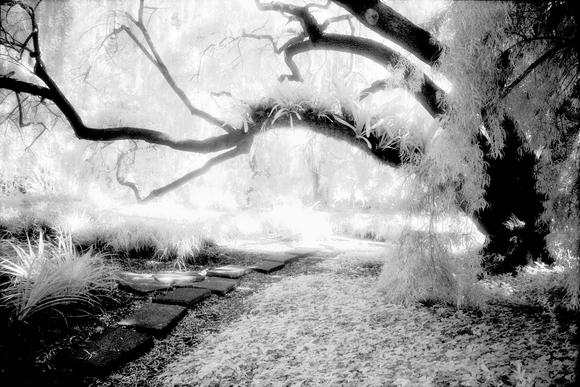 Pathway #1