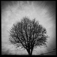 Murray Tree