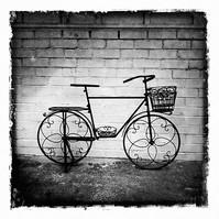 Lodi Bike