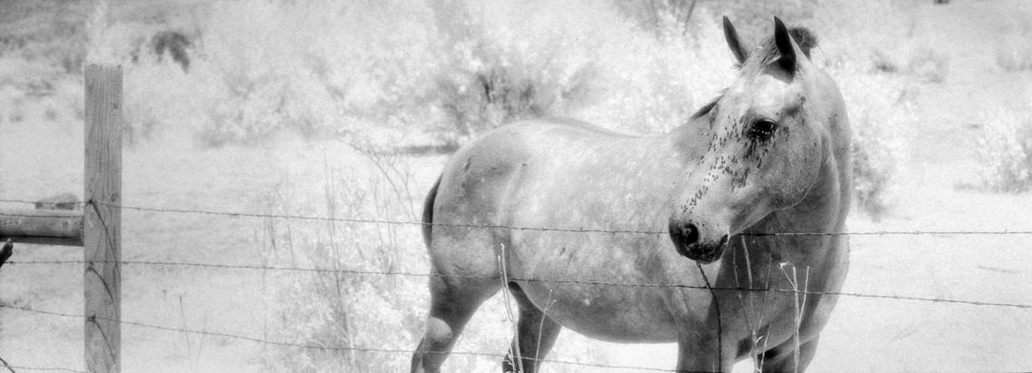Horse #13