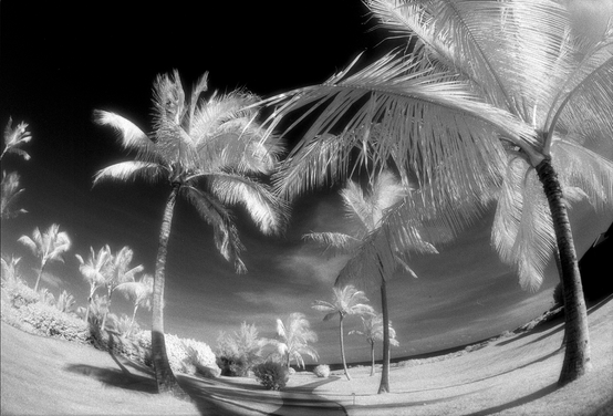 Palm Trees #1