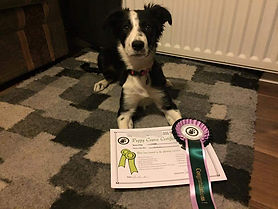 Photo showing award winning agilty dog