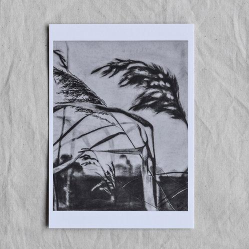 Kunstkaart riet