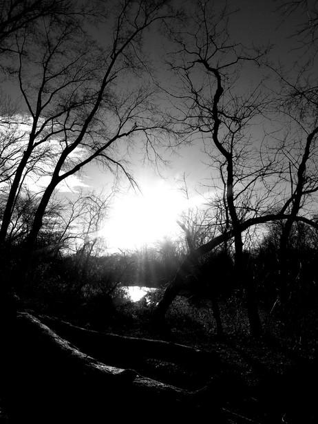 Forest noir