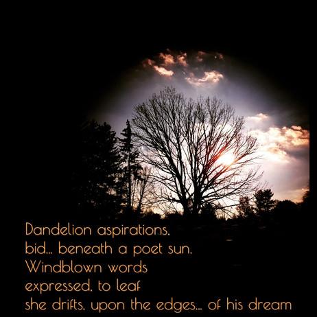 Dandelion aspirations