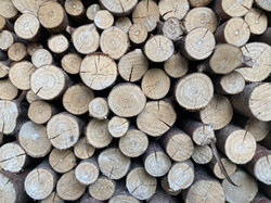 Deeside Willow - Stacked Willow Wood Fuel