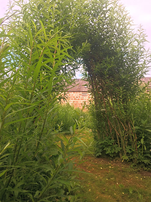 Deeside Willow - Living Structures