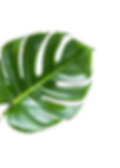 Leaf%2525252520%2525252520_edited_edited