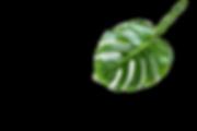 Leaf%2520%2520_edited_edited.png