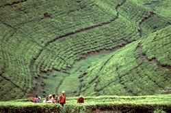 paysage_burundi