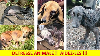 DETRESSE ANIMALE_18042021.jpg