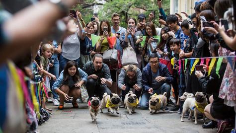 HK Doggie Dash
