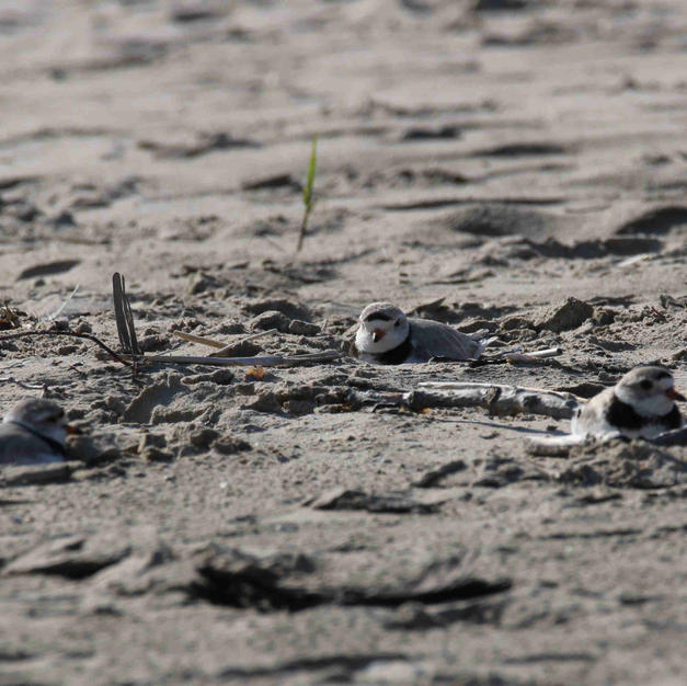 New arrivals resting in the sand.