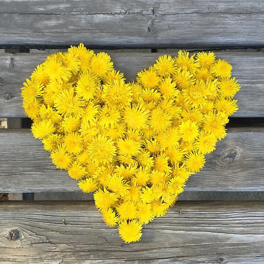 dandelion-heart.jpg
