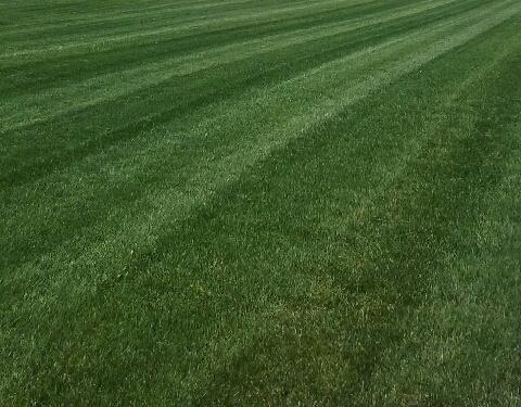 lawn - Copy.JPG