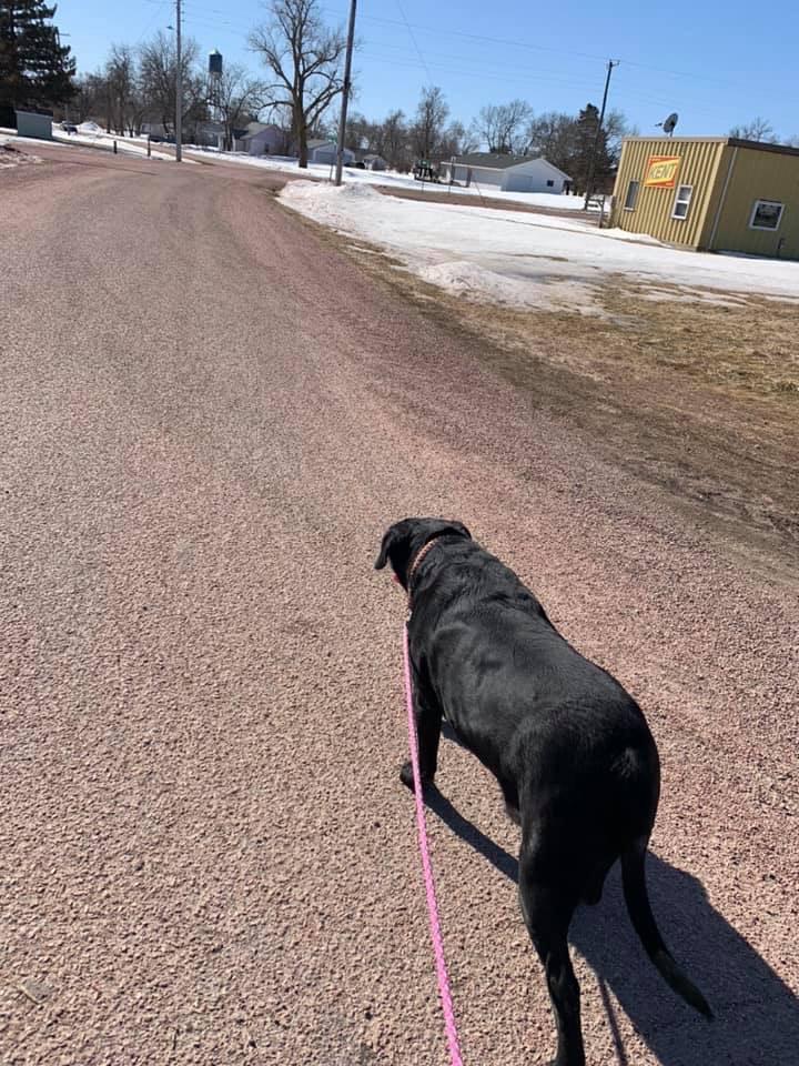 Rocky Bailey enjoyed a sunny walk with Amy Bailey on Saturday.
