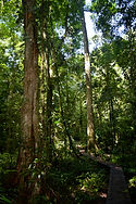 Bosque lluvioso, Tirimbina, Costa Rica