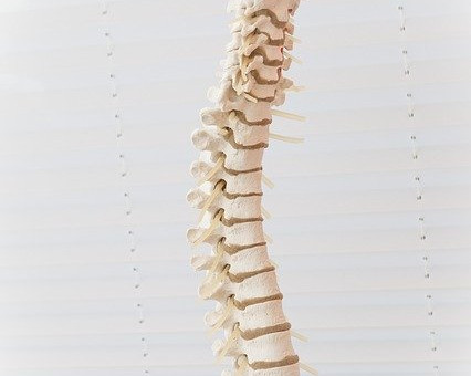 Bones of the Spinal Column - A Brief Overview of The Vertebrae